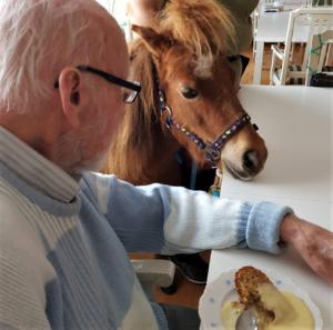 Hästbesök under fikastunden på Vendelsögården på Vendelsö